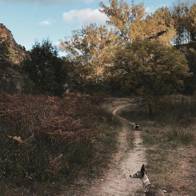 image: Aquí, en la montaña, con Mollie y Lora ⛰ by lulumai