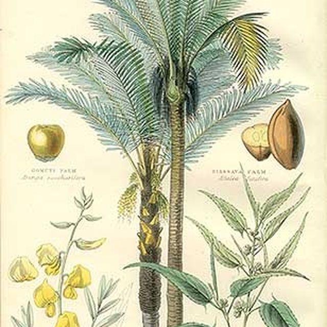 image: Palms by danielgc