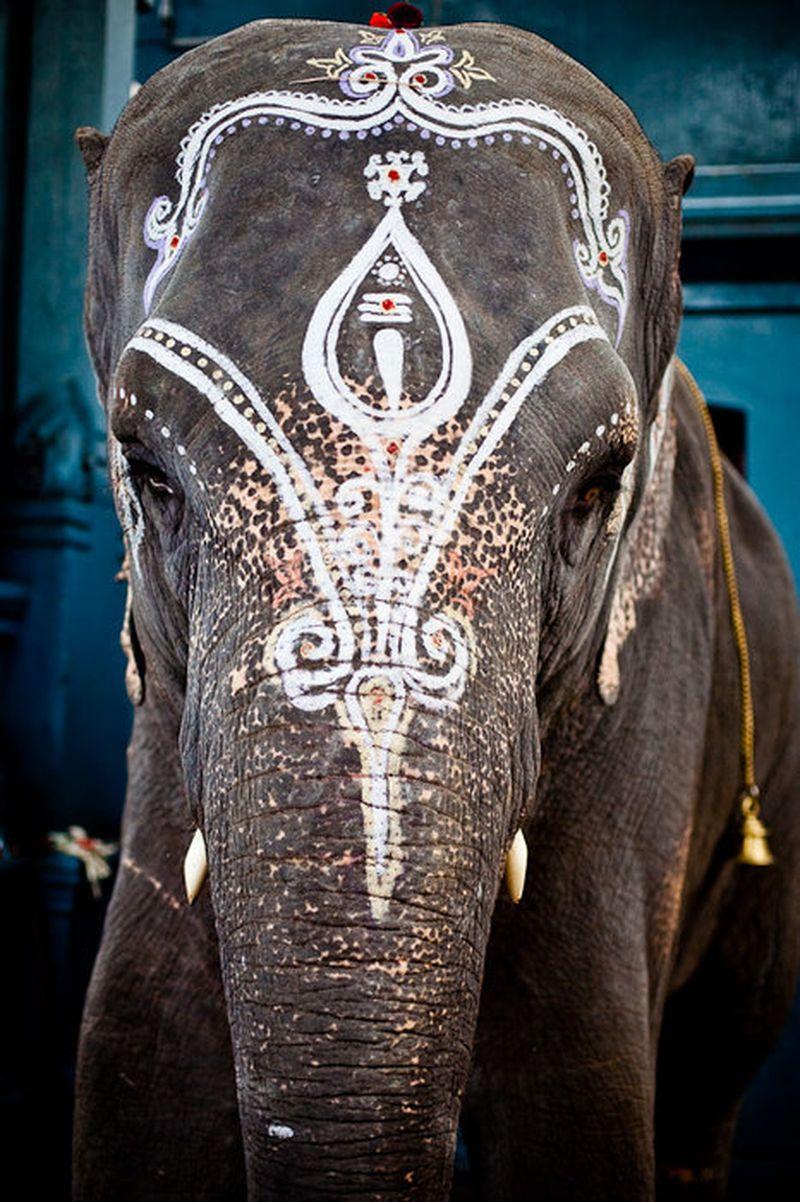 image: ELEPHANT by jack-sparrow