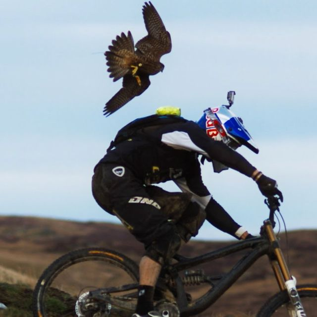 video: Gee Atherton (MTB) gets hunted by a Peregrine Falcon by Kike
