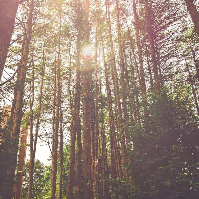 image: Lost in the woods...?.....#ig_shotz #visualoflife #folkmagazine #folkgood #folkgreen #ig_color #ig_unitedstates #newhampshire #visualcollective #agameoftones #beautifuldestinations #bestoftheday #photooftheday #travelgram #travelawesome #travellingth by majolophoto
