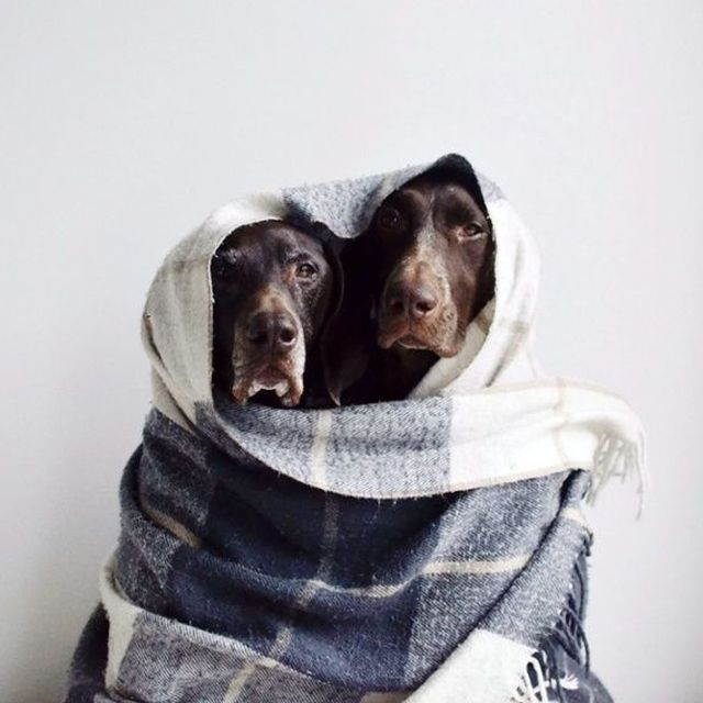image: LOVELY DOGS by letiode