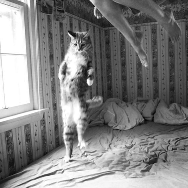 image: yuppy!!! by raquel-f-barcia