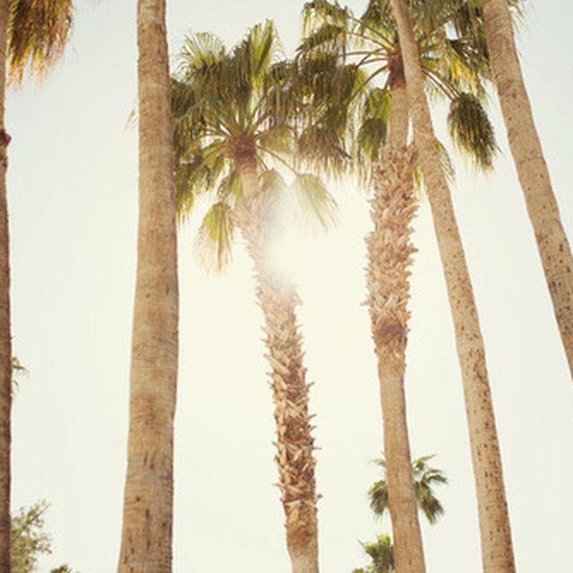 image: Summer by mbcervera
