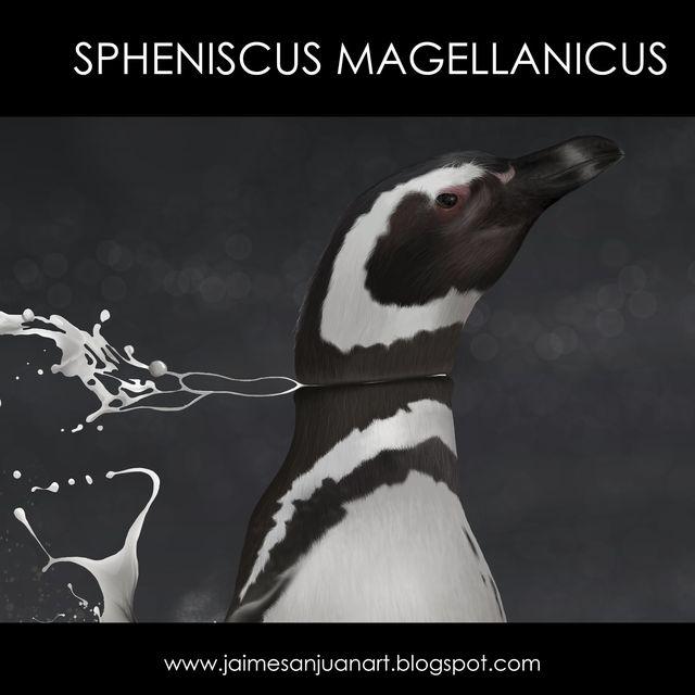 video: Spheniscus Magellanicus by jaime-sanjuan