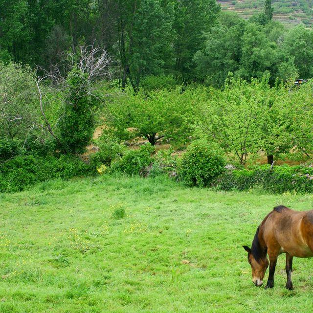 image: I love Nature! by catiasilva