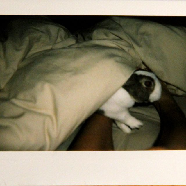 image: bunny in the bed by alpolvolunar