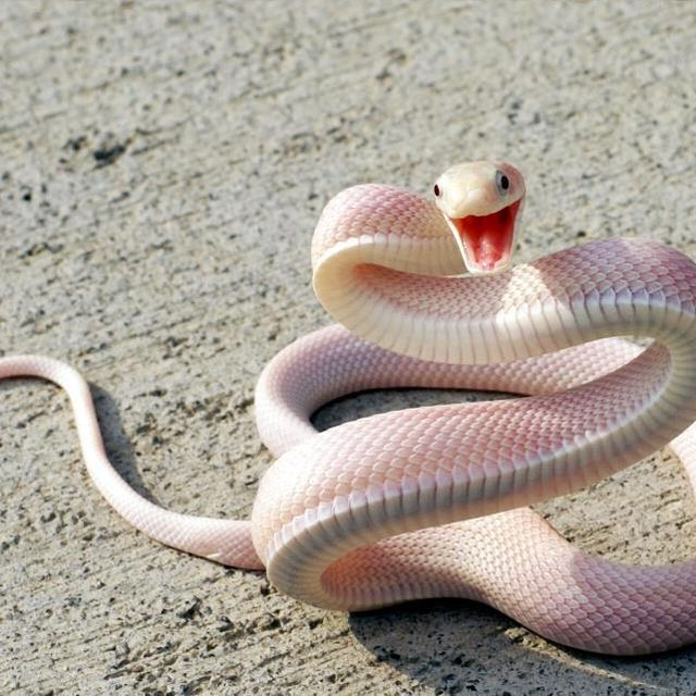 image: Snake. by is