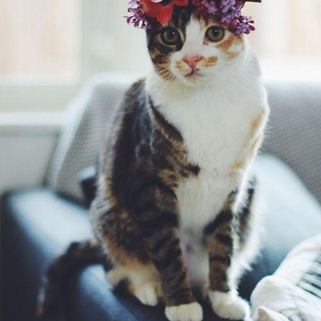 image: ROMANTIC CAT by peeptoes
