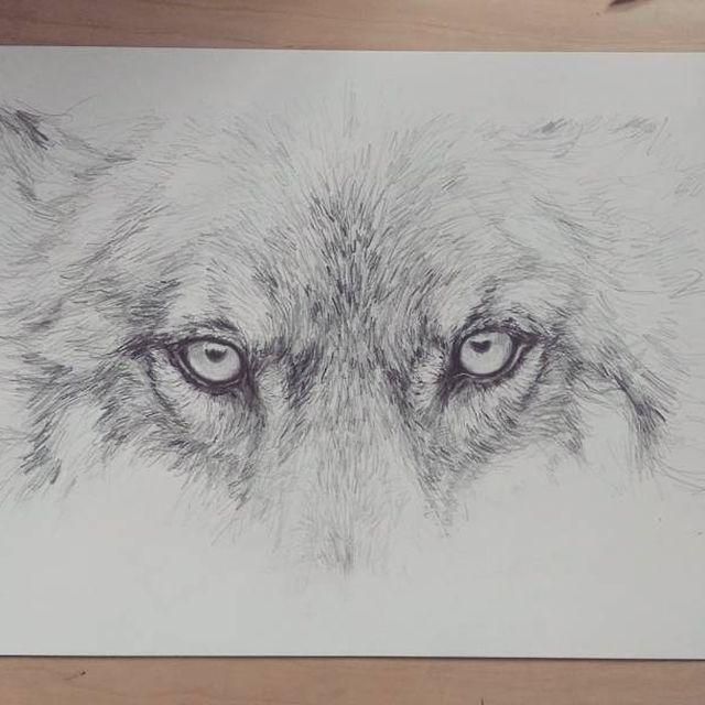image: ? #wip #wolf #lobo #animal #ilustracion #dibujo #art #lapiz #parker #ink #pencil #paper #arte #papel #estudio #desk #studio #artist #got7 #nymeria #huargo #stark #elisaancori by elisaancori