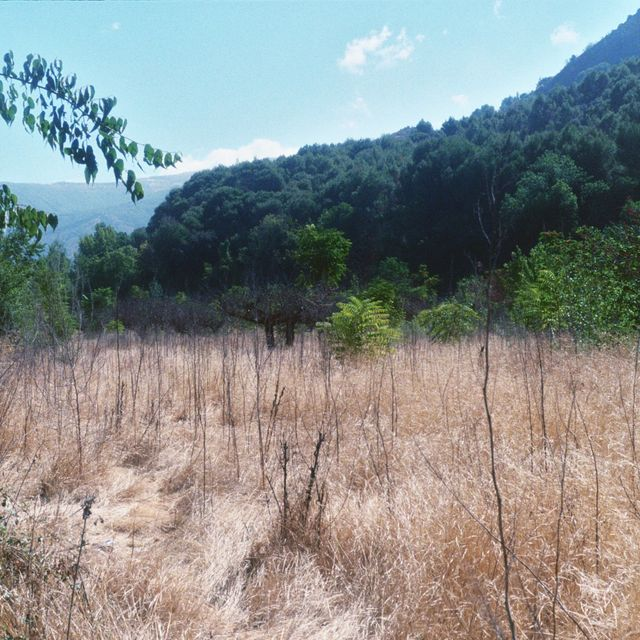 image: vega sweet jungle by alejandronieto