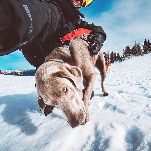 image: It's never a bad time when I have to hang with this guy (Avy dog, Flash) for hours on end, or if it's with any of the 4 other avalanche pups ?—#Avalanche #Dog #Snow #GoPro #Flash by kyleohlson