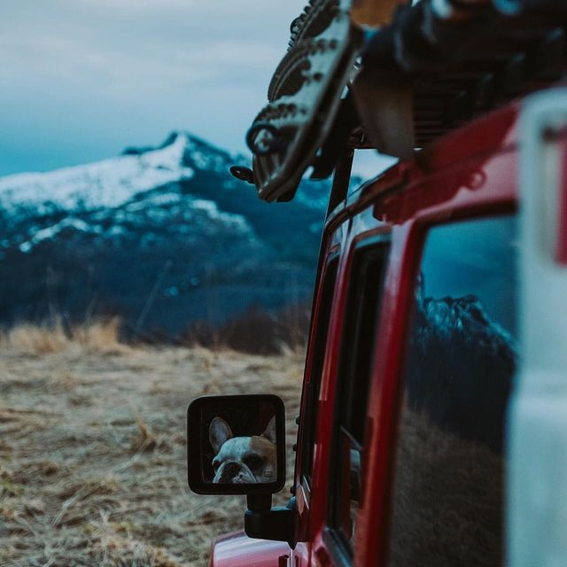 image: Waiting for mom to get back. ...... #roamtheplanet #neverstopexploring #moodygrams #discoverearth #lookslikefilm #exploretocreate #agameoftones #wildernessculture #awesome_earthpix #greatnorthcollective #aov #earthfocus #campingofficial #stayandwander by monascherie