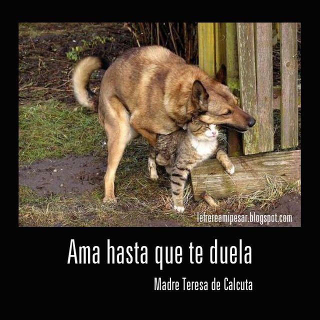 image: Ama y ensancha el alma by lefrere