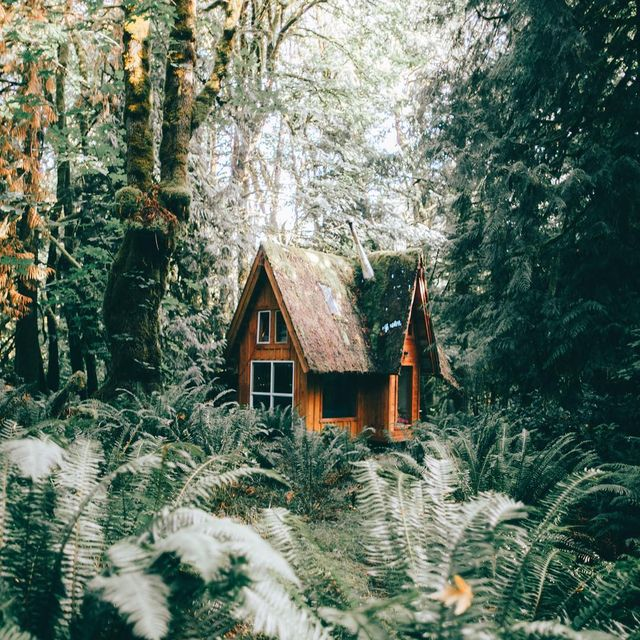 image: Lost in the forest. Edited with my new preset pack, Pacific Northwest Mood, link in my bio. Cabin built and designed by @jacobwitzling by lostintheforrest
