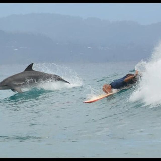 video: Dolphins show up surfers in spectacular surfing show... by amped