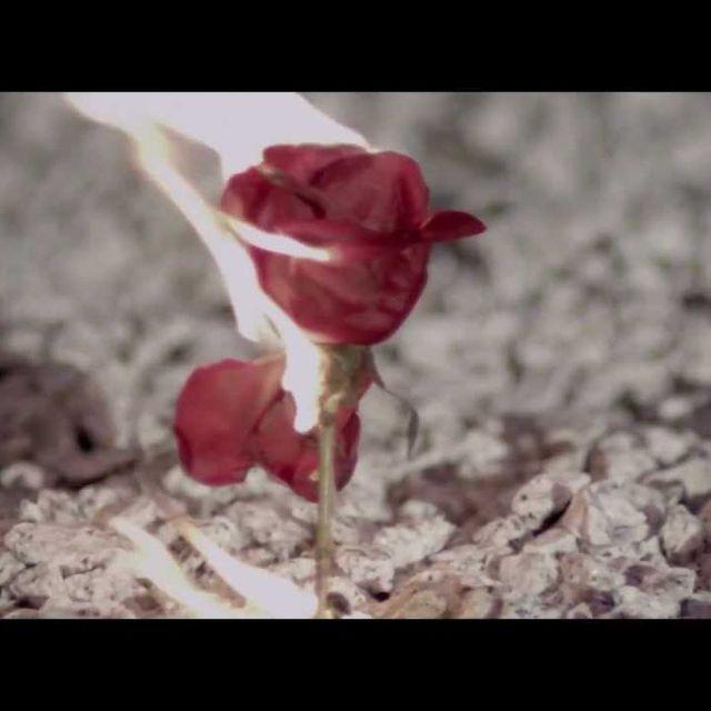 video: Fuel Fandango - New life by veronik