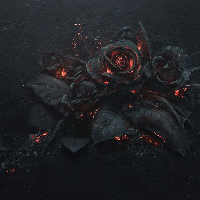 image: A Smoldering Bouquet of Roses Photographed by Ars Th... by neverdiscrete