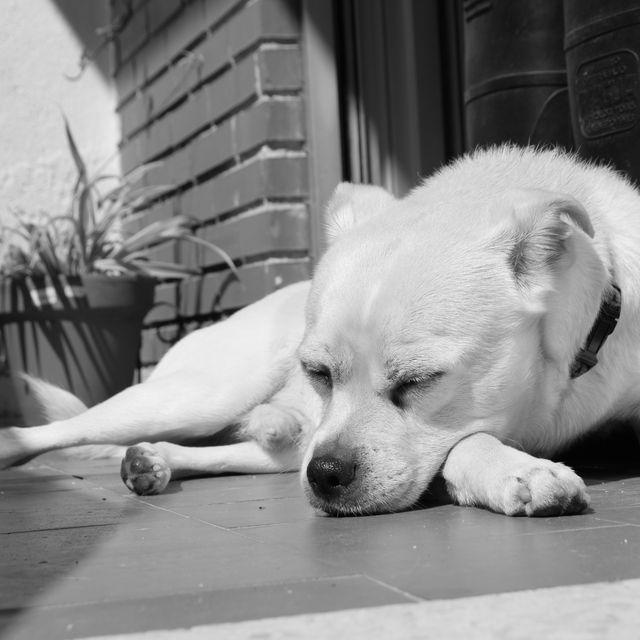 image: SLEEPING by marinadiezp