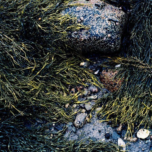 image: low tide by ricardocavolo
