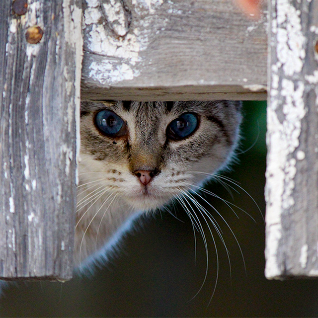 image: BLUE EYES by helenablanch_