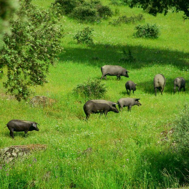 image: Extremadura: Pure nature by catiasilva