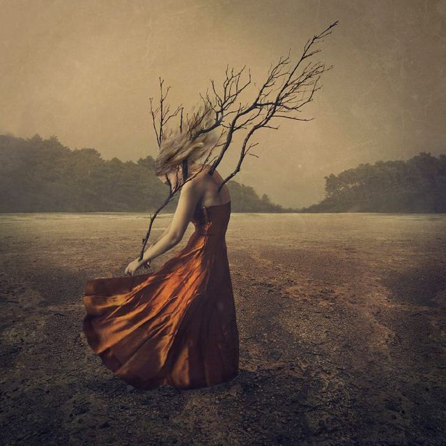 image: Branching Out by brookeshaden