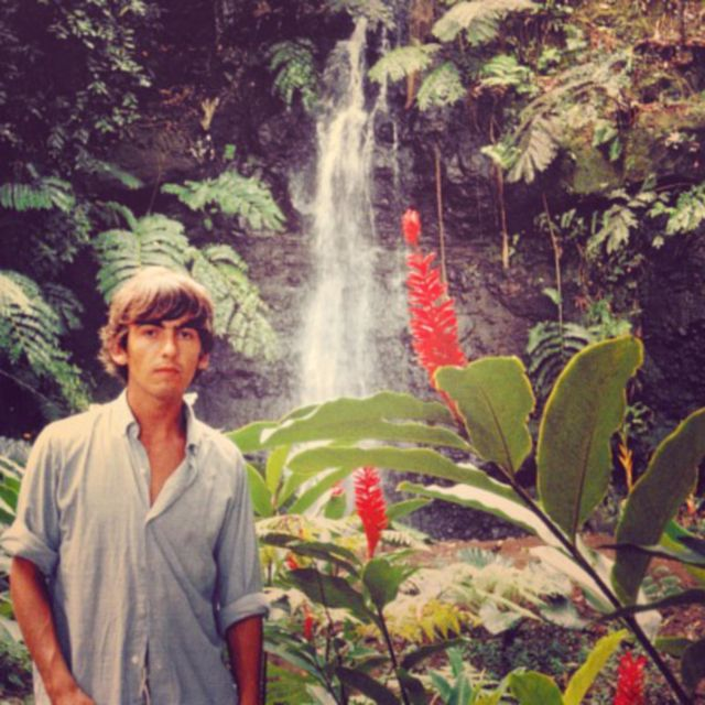 image: Tropical George by elen_
