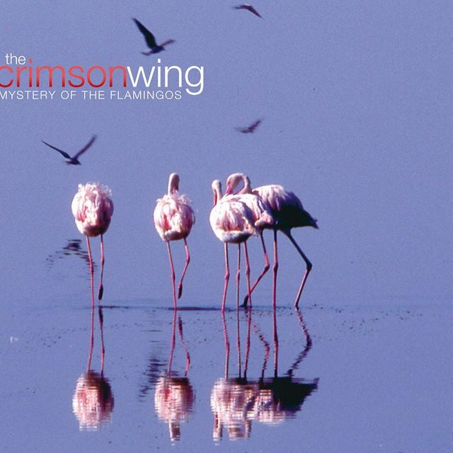 video: The Crimson Wing by jbhortas