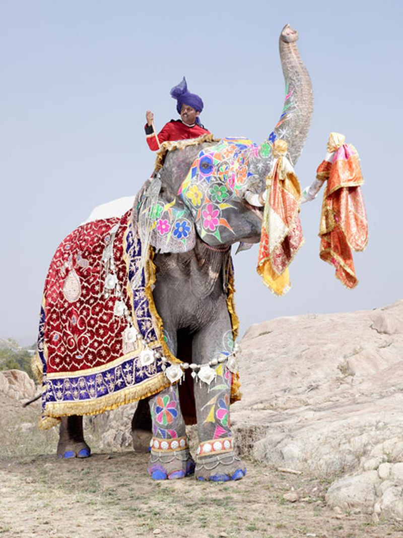 image: PAINTED ELEPHANT by mrs-boutique