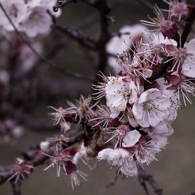 image: ?.#flowers #flower #petal #petals #nature #beautiful #love #pretty #plants #blossom #sopretty #spring #summer #flowerstagram #flowersofinstagram #flowerstyles_gf #flowerslovers #flowerporn #botanical #floral #florals #insta_pick_blossom #flowermagic #ins by salvo_berry