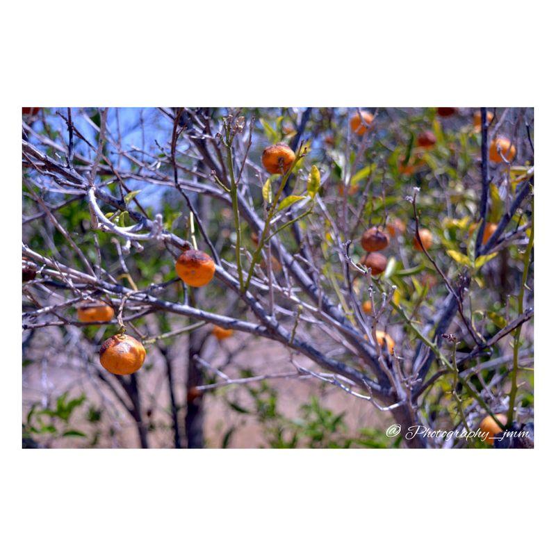 image: Naranjos by photography_jmm