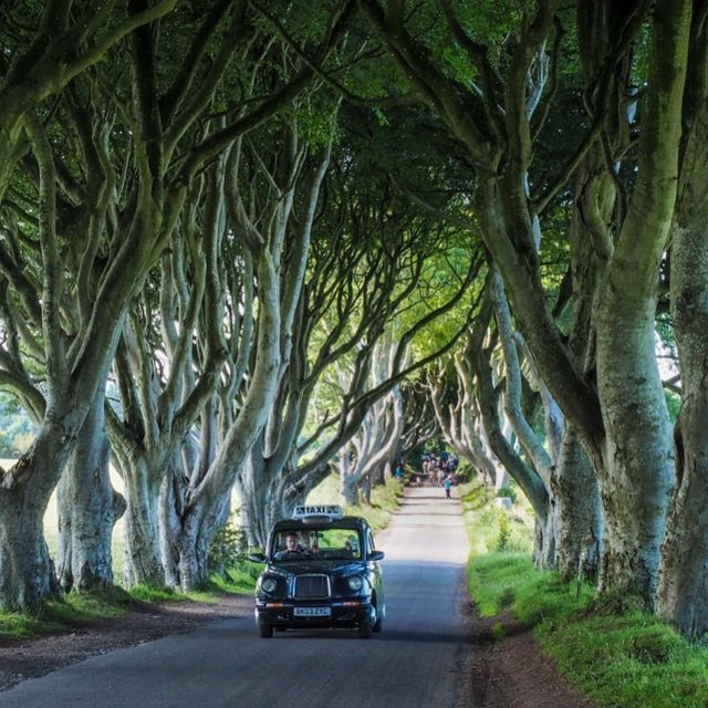 """image: The """"Dark Hedges"""" in Northern Ireland have been on my radar for years - but now they're on a lot of other peoples' radar, too, thanks to """"Game of Thrones"""" (they filmed the King's Road here back in Season 2). ?If you show up in the middle of the day (or, by dangerousbiz"""