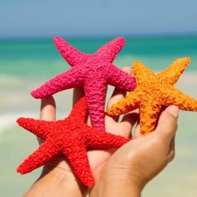 image: Estrellas de mar by xerryberry