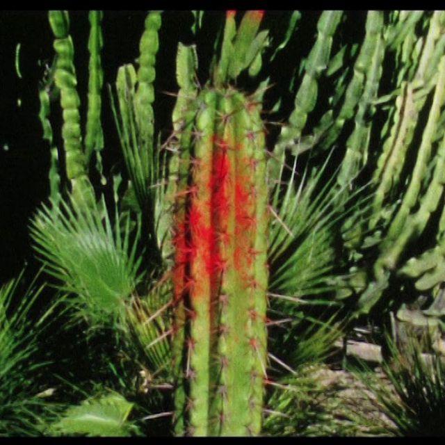 video: Oso Leone - Ficus on Vimeo by borja-sainz-562