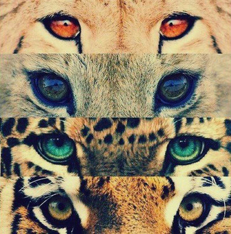 image: CAN U SEE ME? by catwalkme