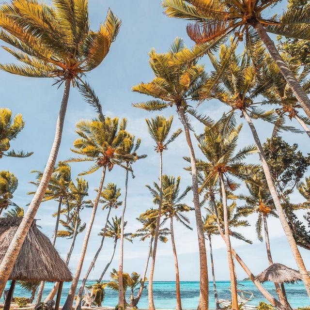 image: 🇫🇷 Coucou les copains! On espère que vous allez bien! Bienvenue à Coconut Beach! Pas besoin de se demander pourquoi cette plage porte ce nom! 🌴😊 Je profite de cette belle journée pour me détendre dans le hamac avec un bon bouquin 📕 pendant que monsieur... by escape_your_life