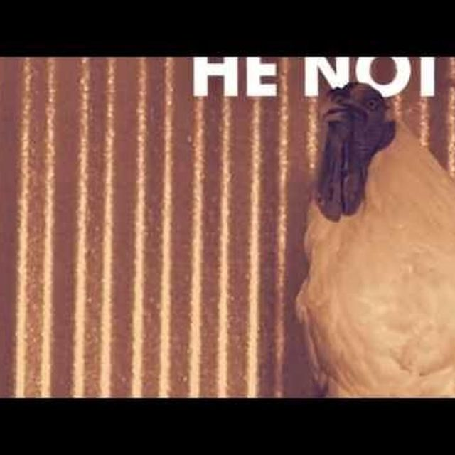 video: Chicken Lips - He Not In (Eats Everything's) by luis-montojo