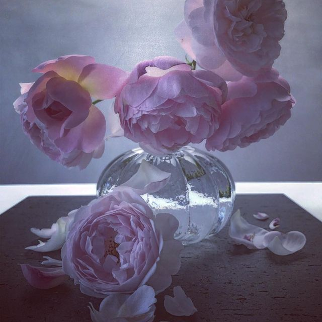 image: Roses from my garden. by nickknight
