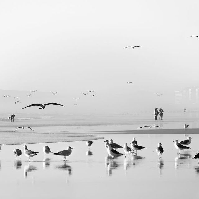image: Birds in the mirror by facesandplaces
