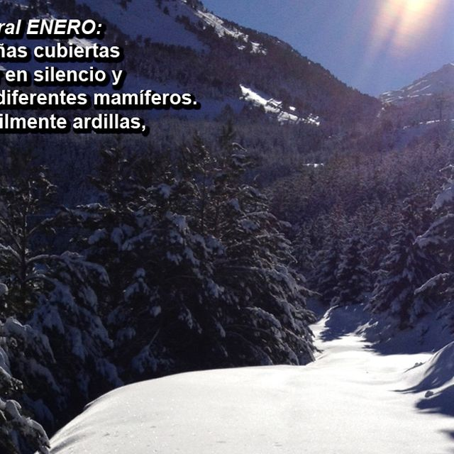 image: Recomendación natural ENERO - Acciónatura by accionatura