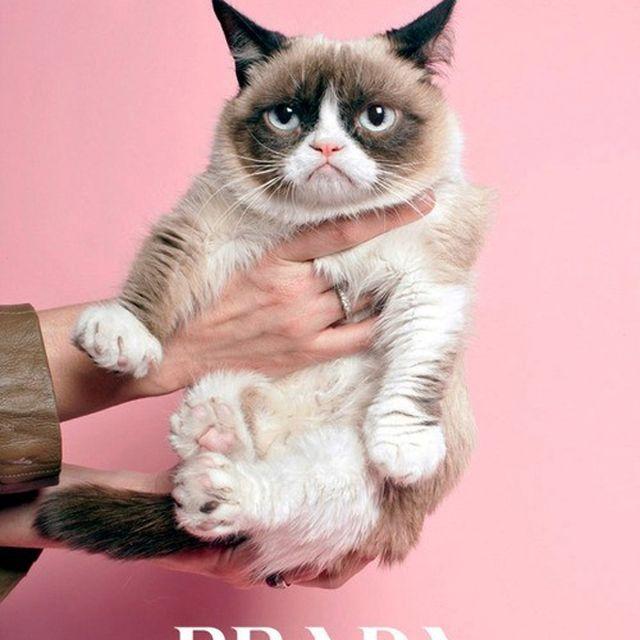 image: Grumpy Cat Prada by ines_parmentier