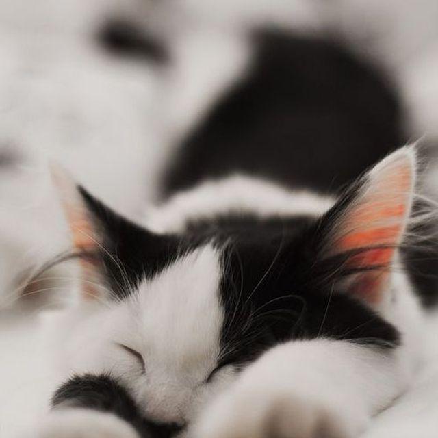 image: kitten love by macarenaobregon