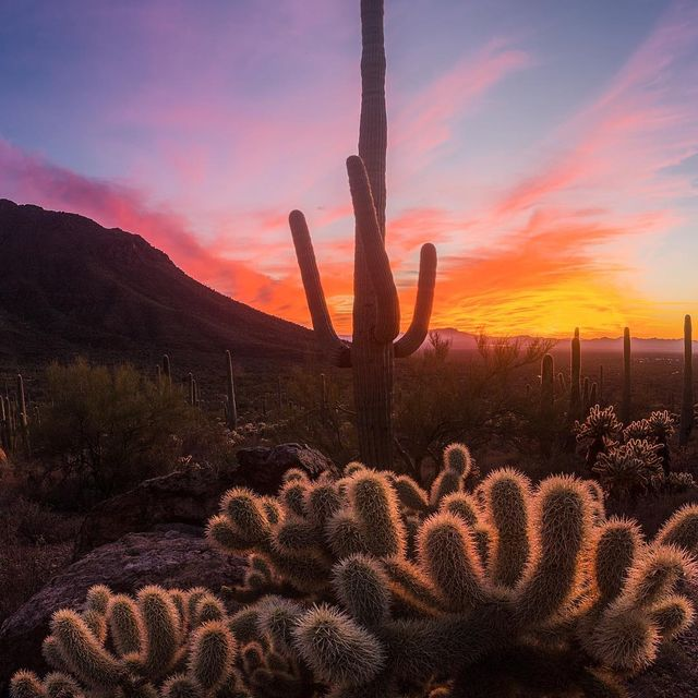 image: I'm excited to be back home in the desert for a while. I've been traveling nonstop since mid July! I missed you, Tucson! Photo taken in @saguaronationalpark.-PS - thanks to all those who came to my presentation at REI last night! I only have 2 more... by seanparkerphotography