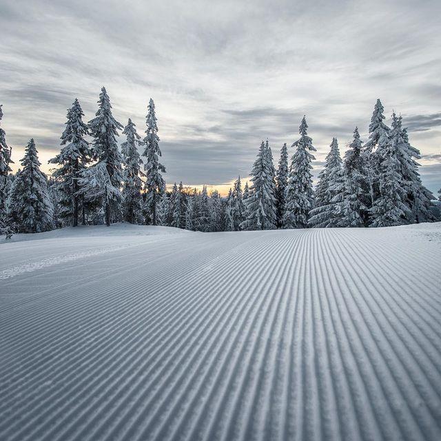 image: Snowy Days by bernstal
