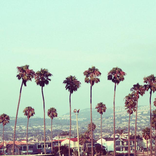 image: palm by amitklorente