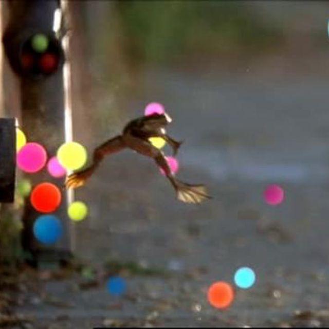 video: Sony Bravia on Vimeo by sancofactory