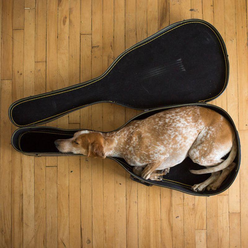 image: guitar case by somewhereiwouldliketolive
