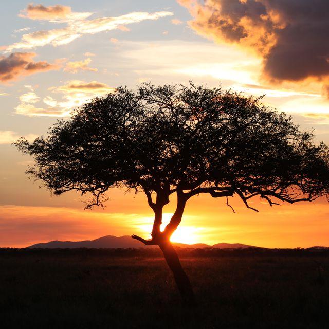 image: Serengeti sunset by Aiia