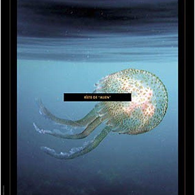image: Preserva los océanos by accionatura